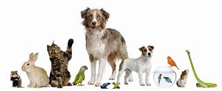 photo service animals